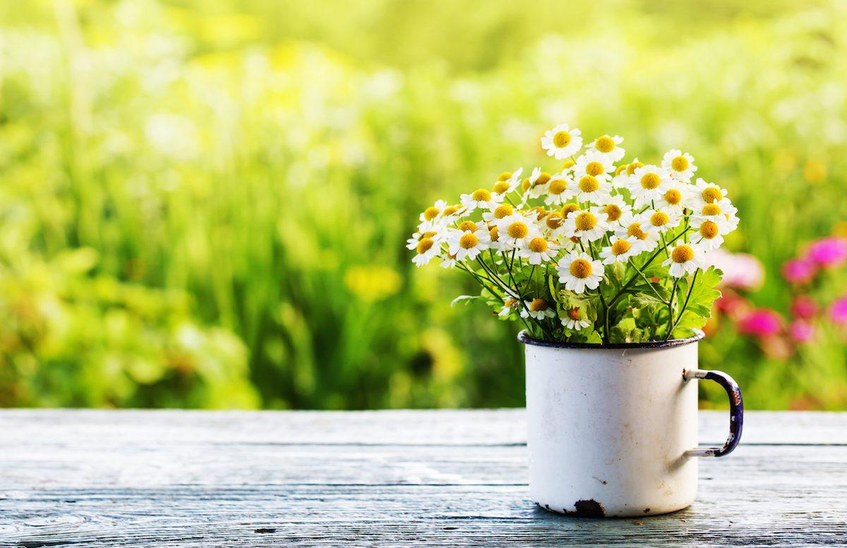 Launch Week Flowers